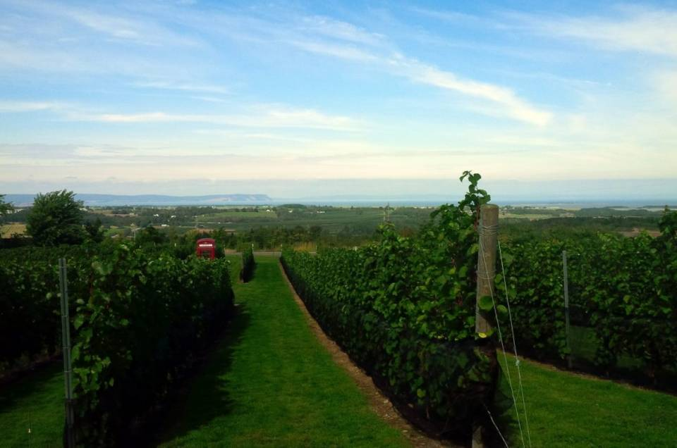 Luckett Vineyard