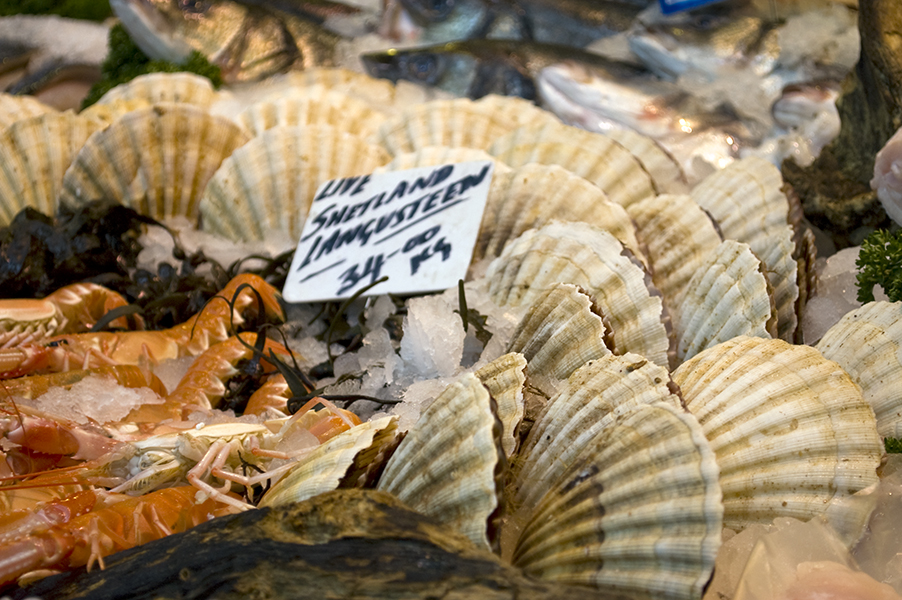 scallops on sale at market