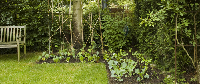 garden vegetable plot