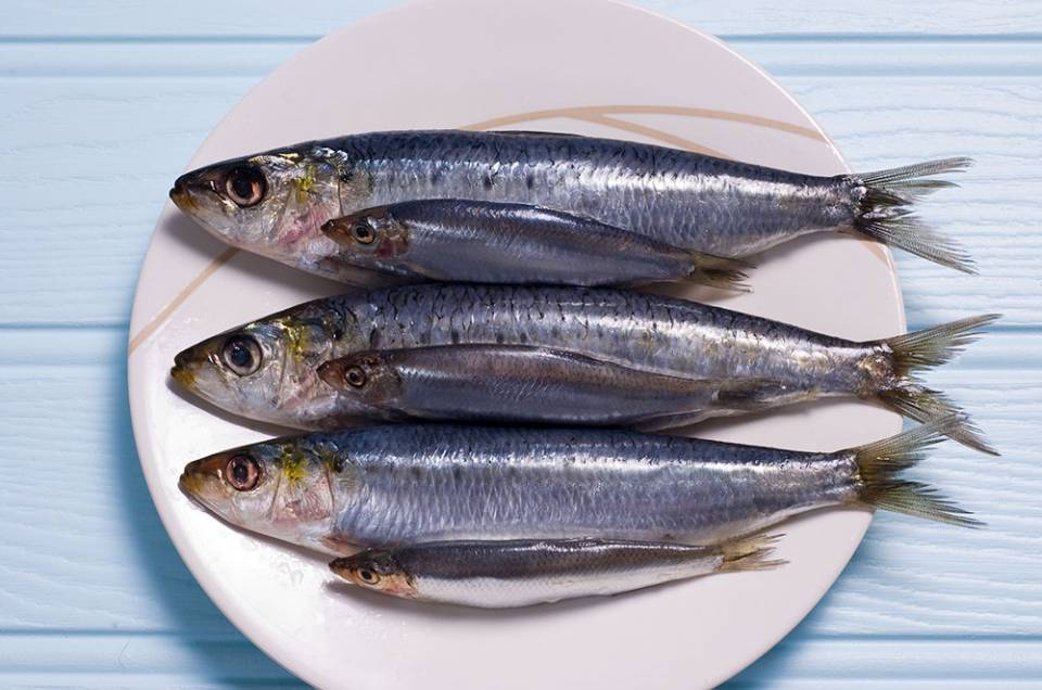 sardines and sprats on a plate