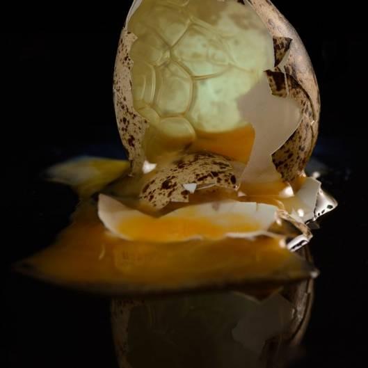 Backlit Broken Quail Egg
