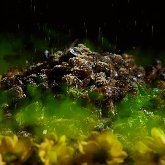 pile of dead bees surrounded in a wreath of poison flowers