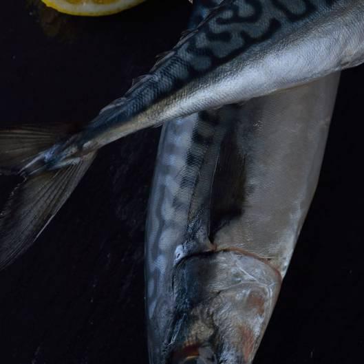 Whole mackerel