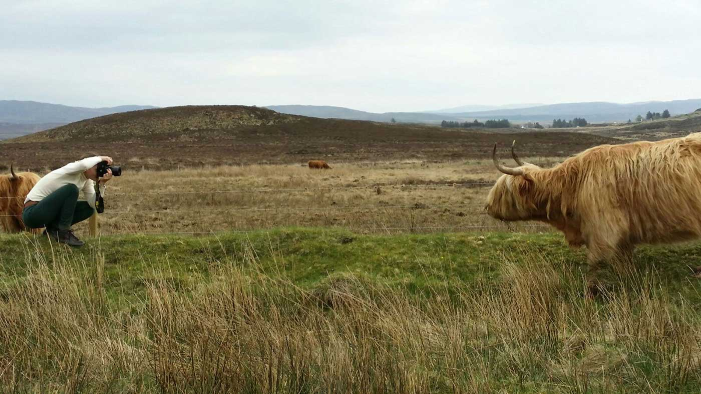 lady photographing a highland cow